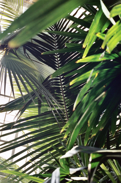 green palm leaves summer - photo #24