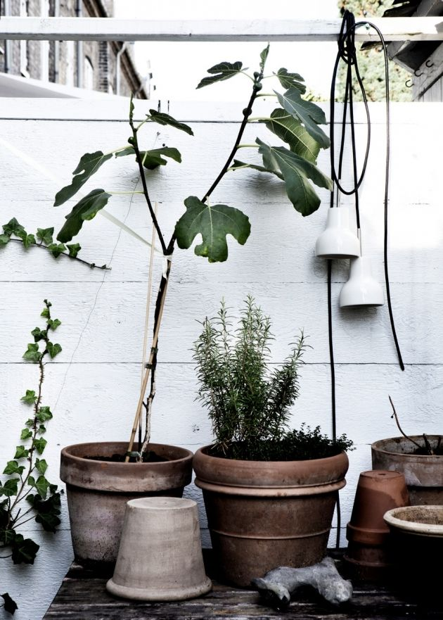 växter 5