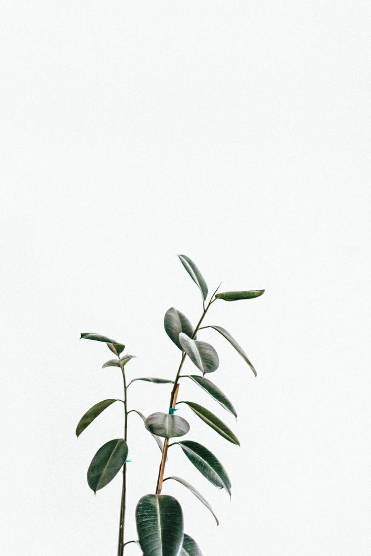 grön 1