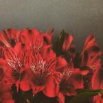 Anna Mårselius Instagram 2