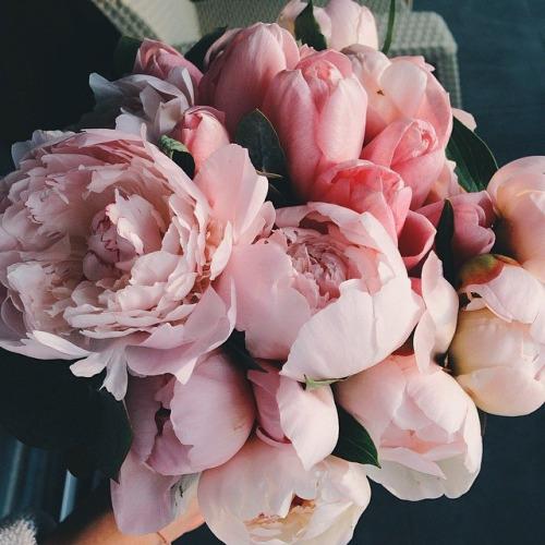 pinks 1