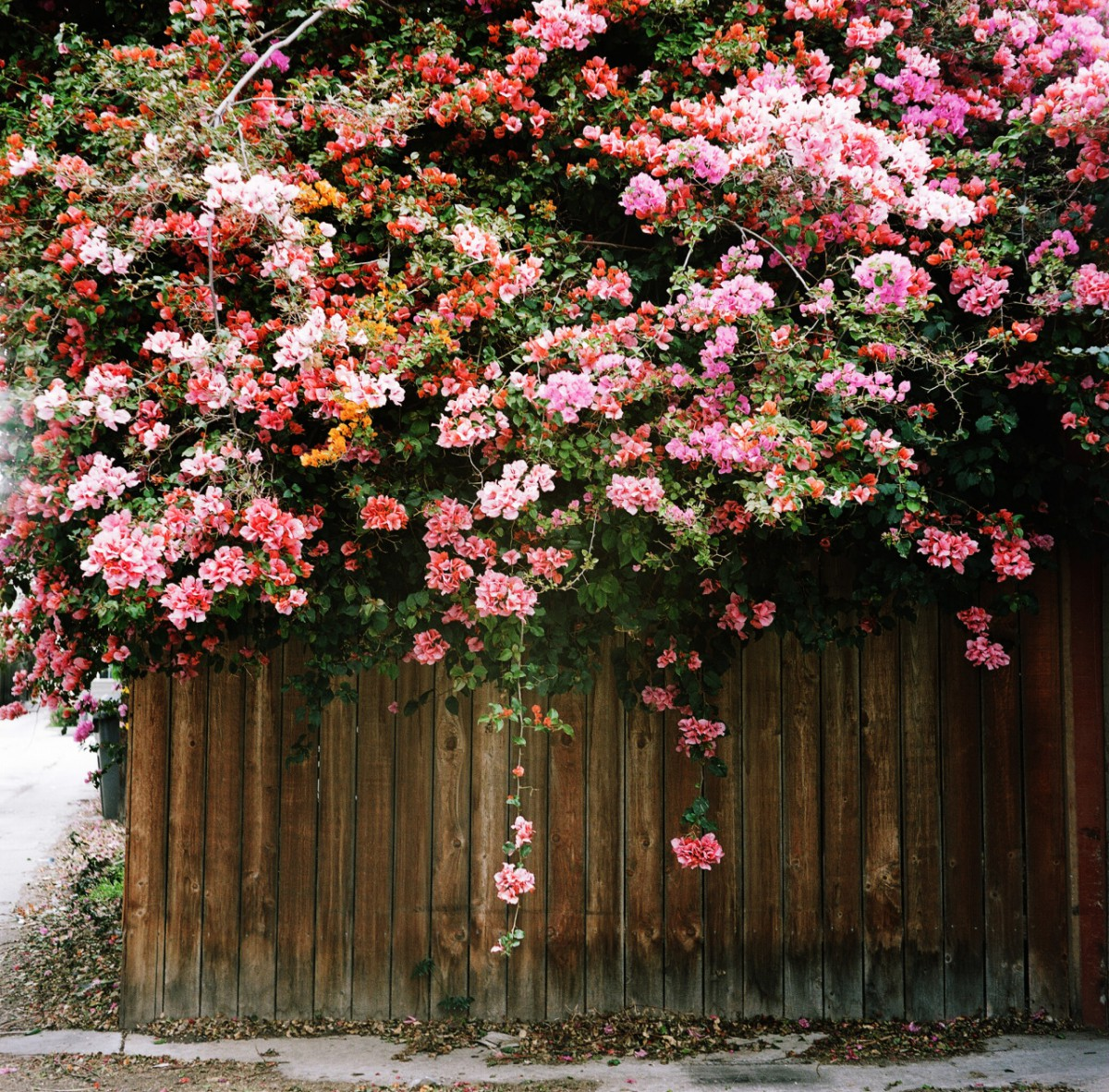 Blommor april