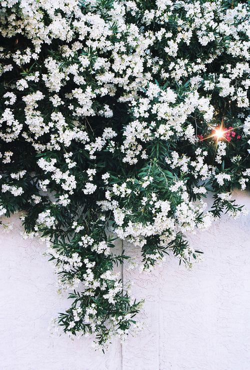 flower june