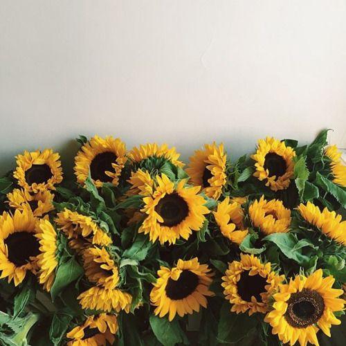 flower january