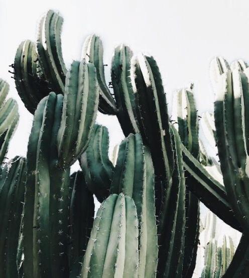 a cactus morning anna gillar bloglovin. Black Bedroom Furniture Sets. Home Design Ideas