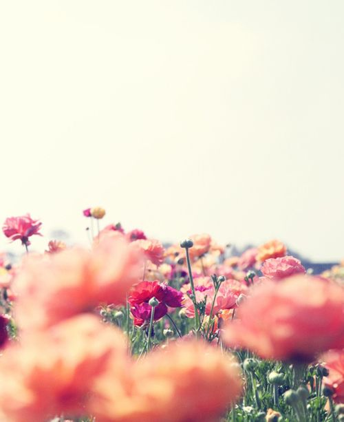 flower feb