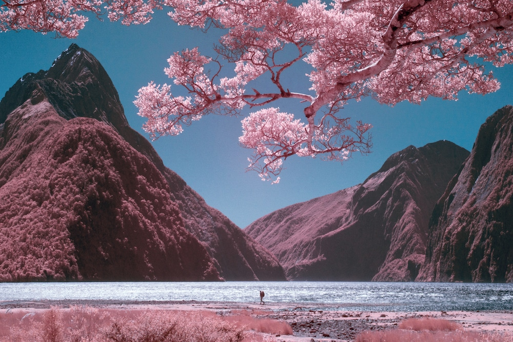 infrared-photography-paul-hoi-1